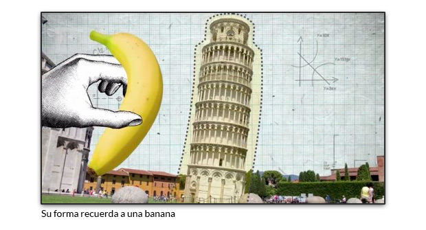Su forma recuerda a una banana
