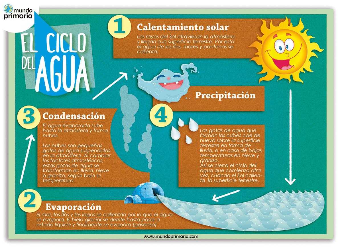 Infografía ilustrada sobre las fases del ciclo del agua. El agua se encuentra en tres estados que van cambiando siguiendo las fases del ciclo del agua.