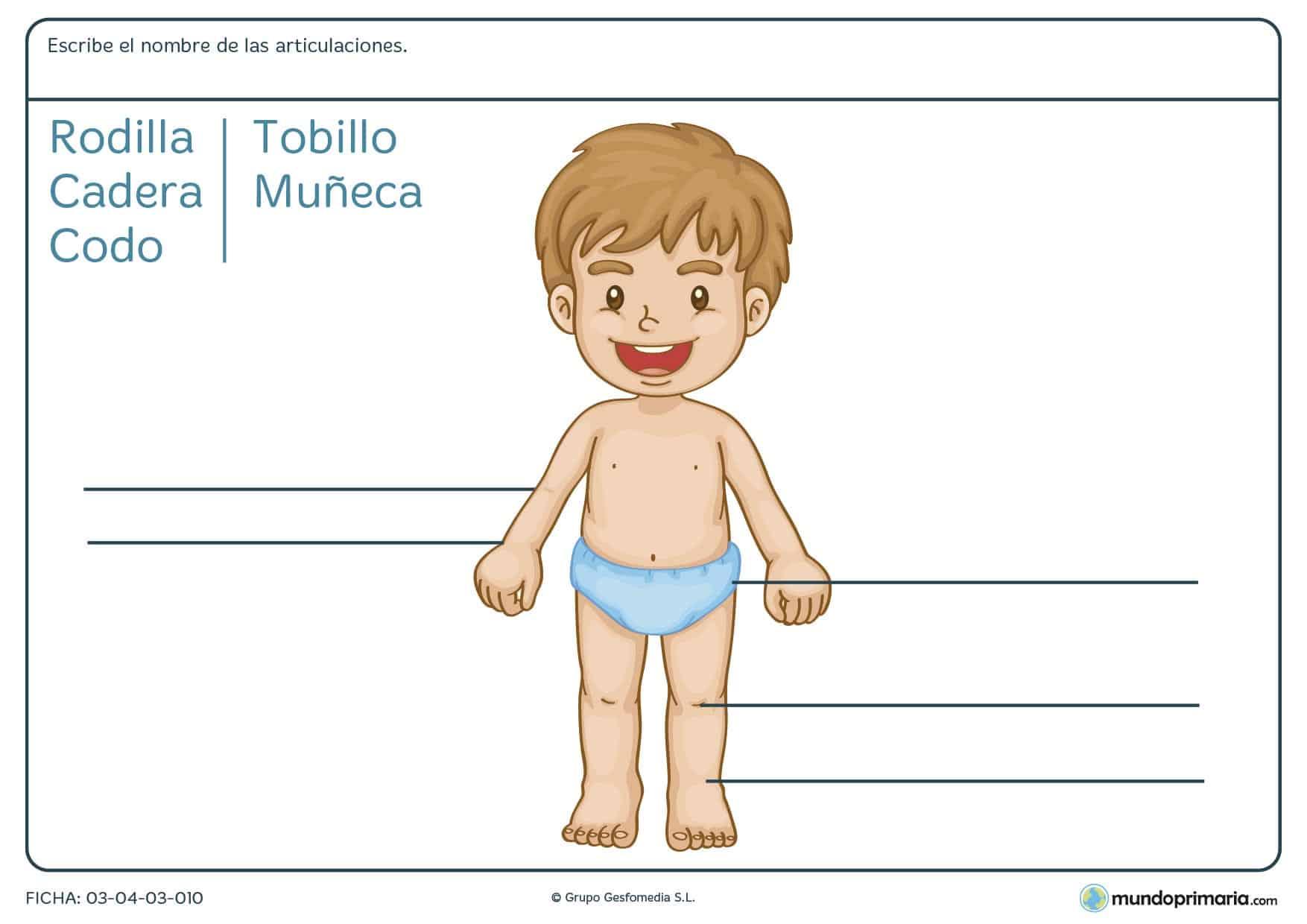 Ficha de las articulaciones donde los niños de primaria aprenden dónde están las partes del cuerpo humano y el nombre de las articulaciones