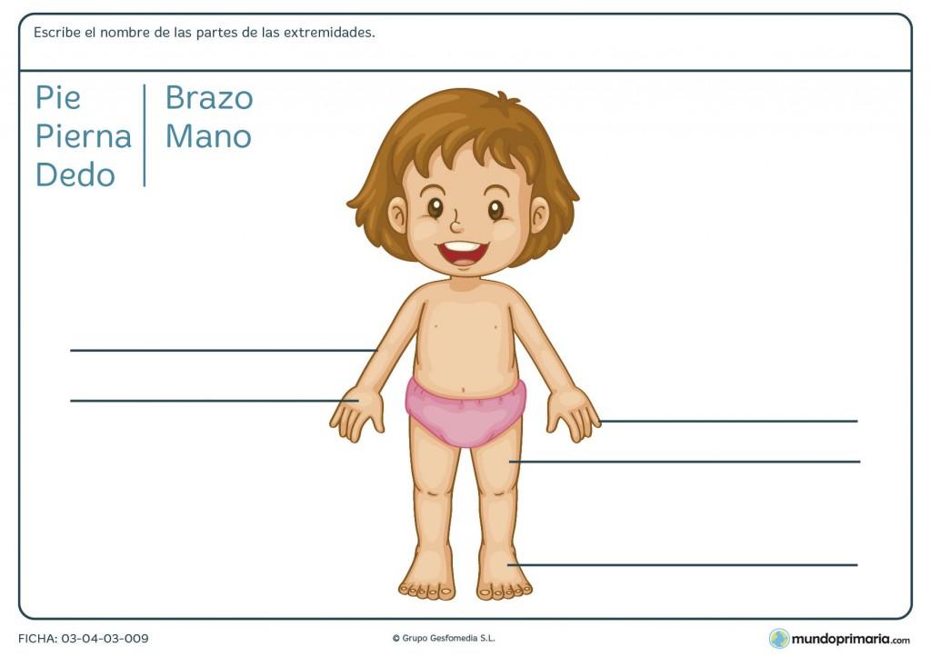 Ficha de las extremidades del cuerpo para primaria