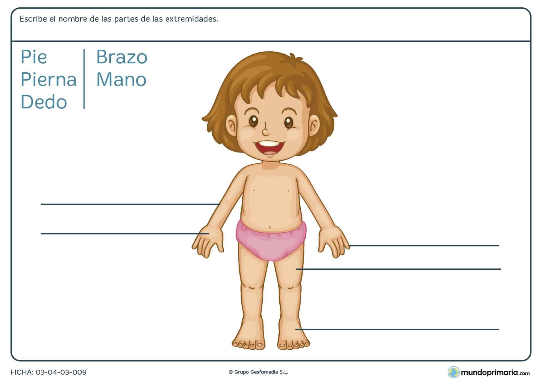 Ficha de las extremidades para que los niños de primer curso de primaria conozcan cómo se llaman las extremidades del cuerpo humano