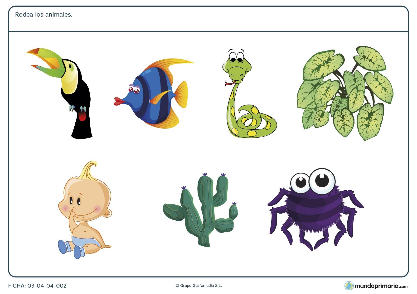 Ficha de los animales para primaria