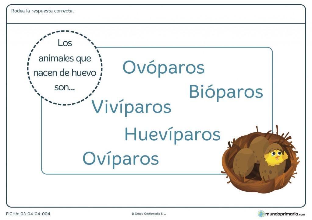 Ficha de los ovíparos para primaria