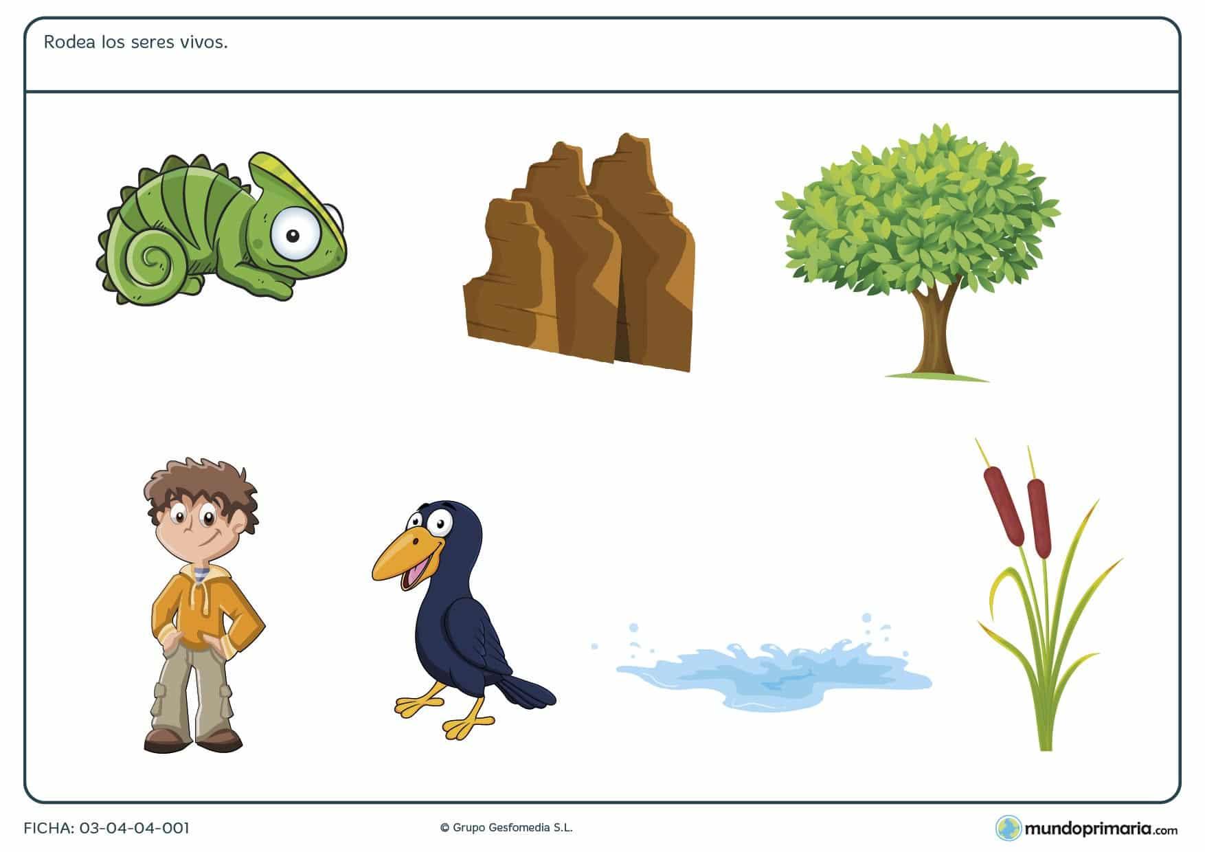 Ficha de los seres inertes para niños de primaria