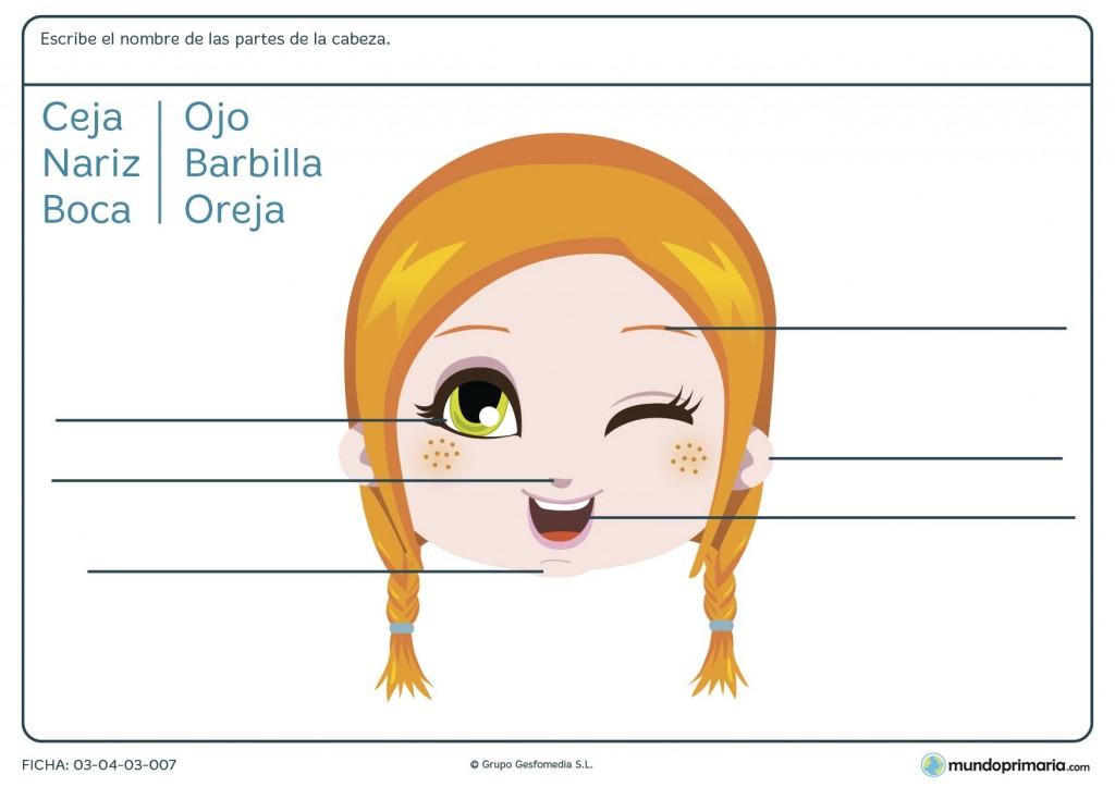 Ficha de nombrar las partes de la cara para primaria