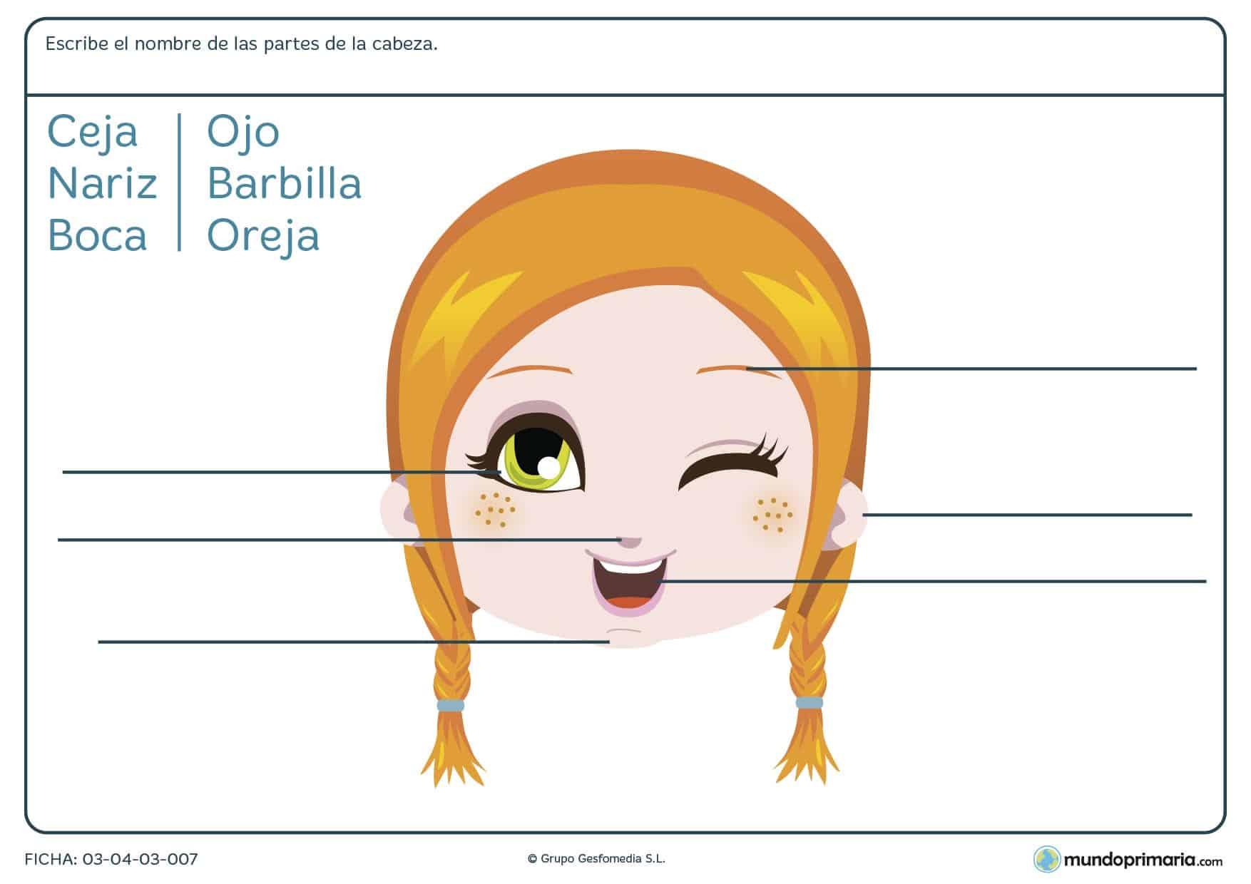 Ficha de nombrar las partes de la cara en la que los niños de 1º de primaria estudian el nombre de las partes de la cara