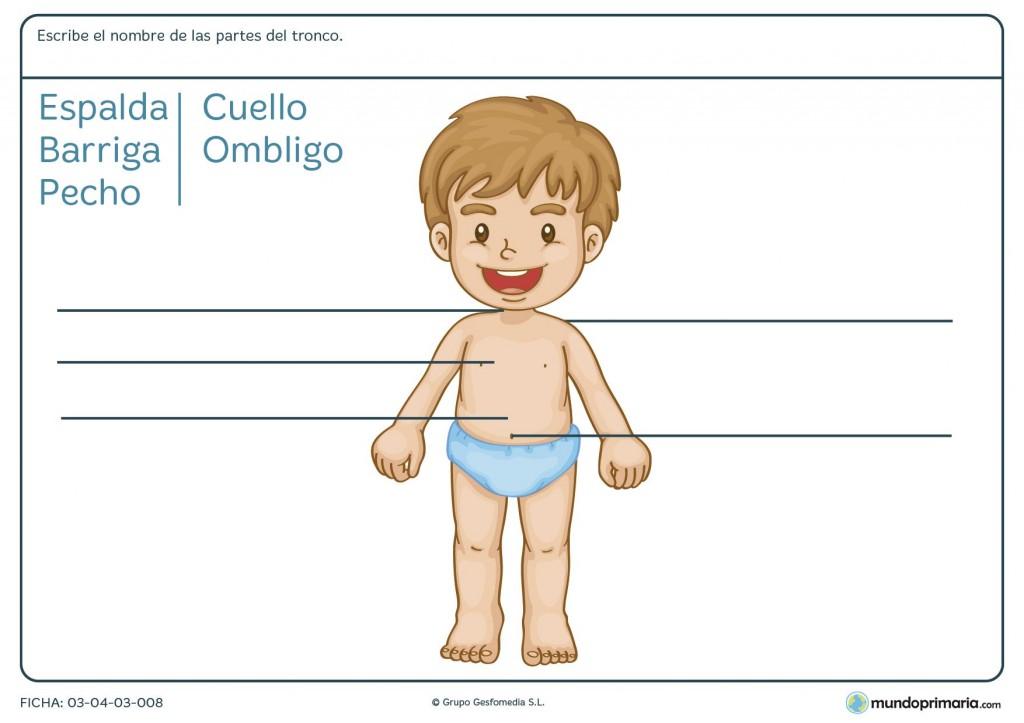 Ficha de partes del tronco humano para primaria