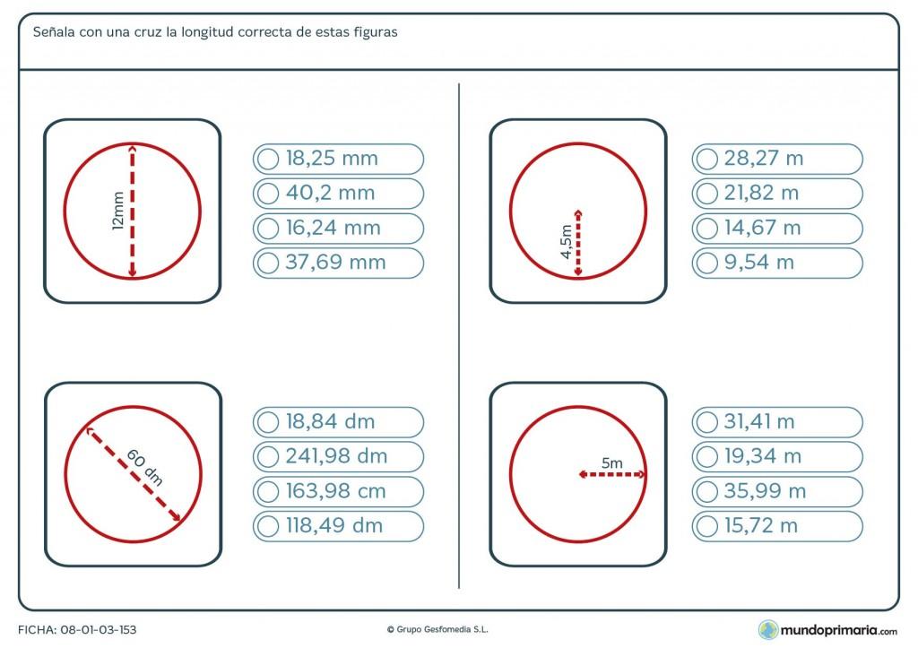 Ficha de longitud de circunferencias para niños de 6º de primaria