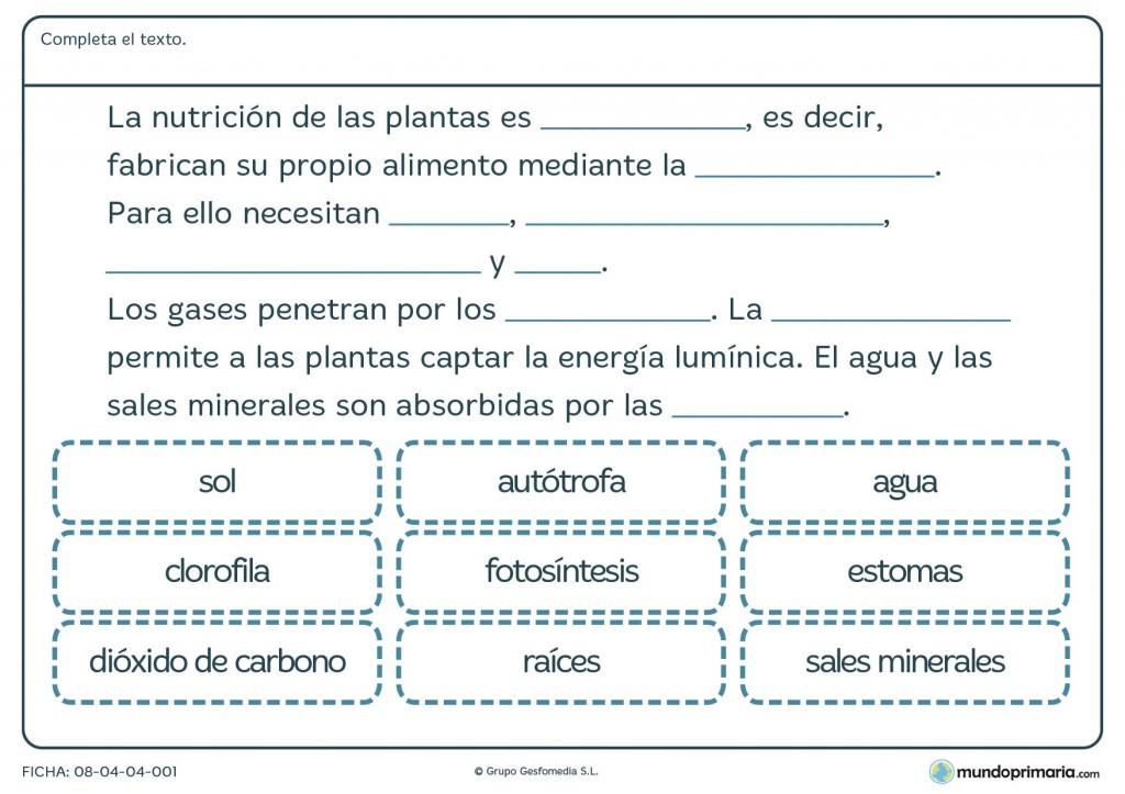 Ficha de nutrición de las plantas para primaria