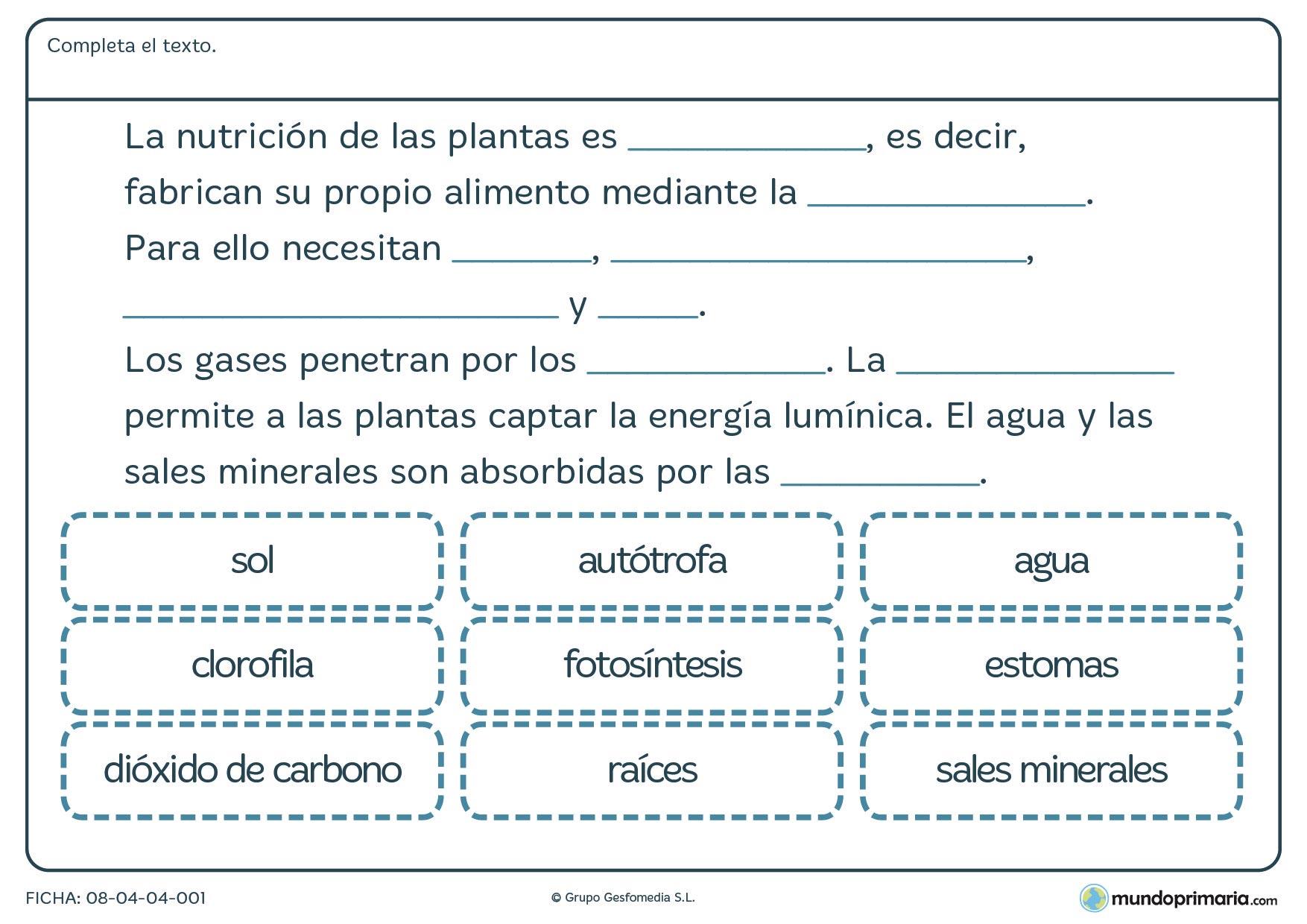 Ficha de nutrición de las plantas en la que habrá de rellenar los huecos con las palabras referidas a la nutrición de las plantas.