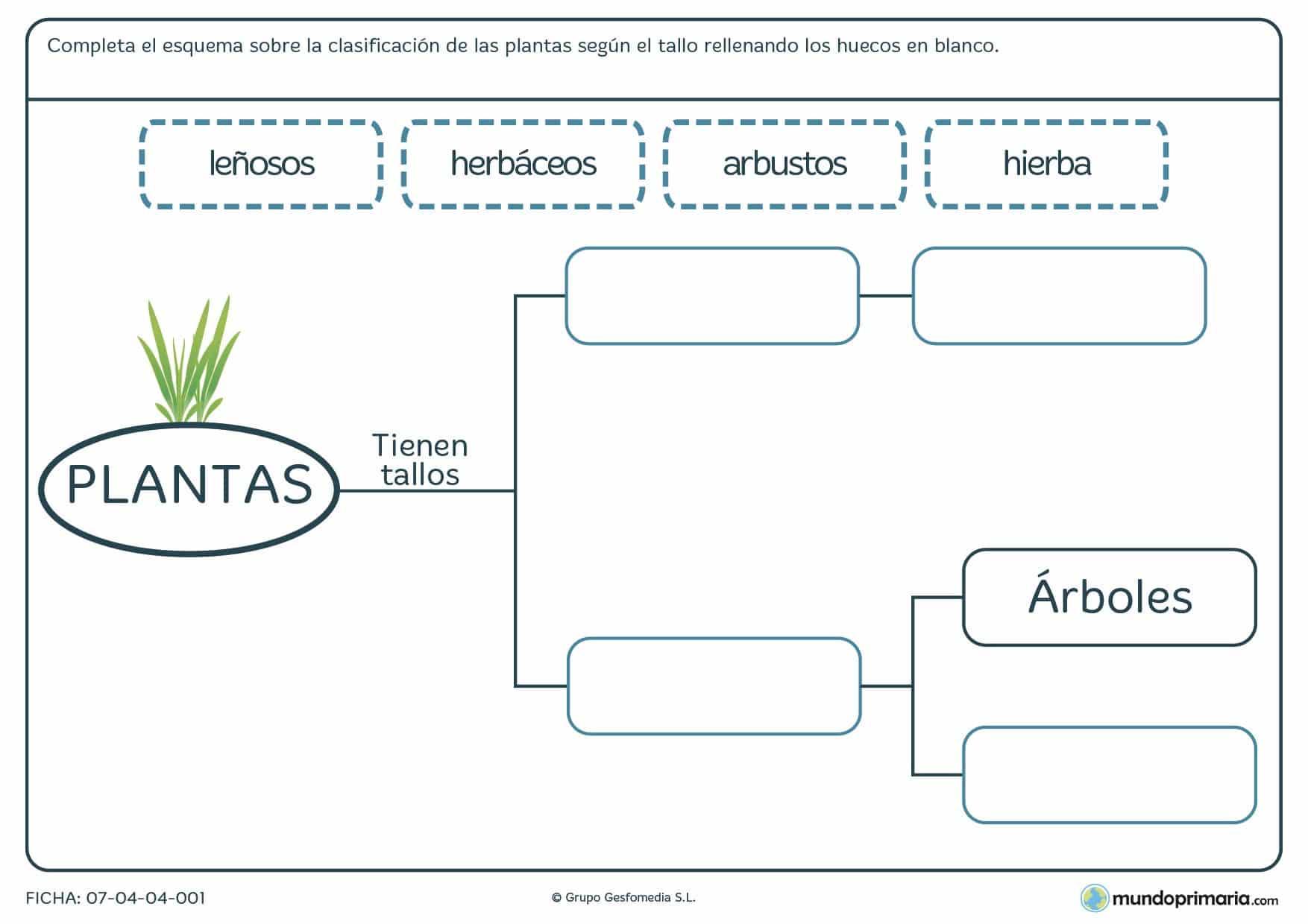 Ficha de plantas según su tallo en la que deberás rellenar los espacios en blanco según se denomine la planta por su tallo.