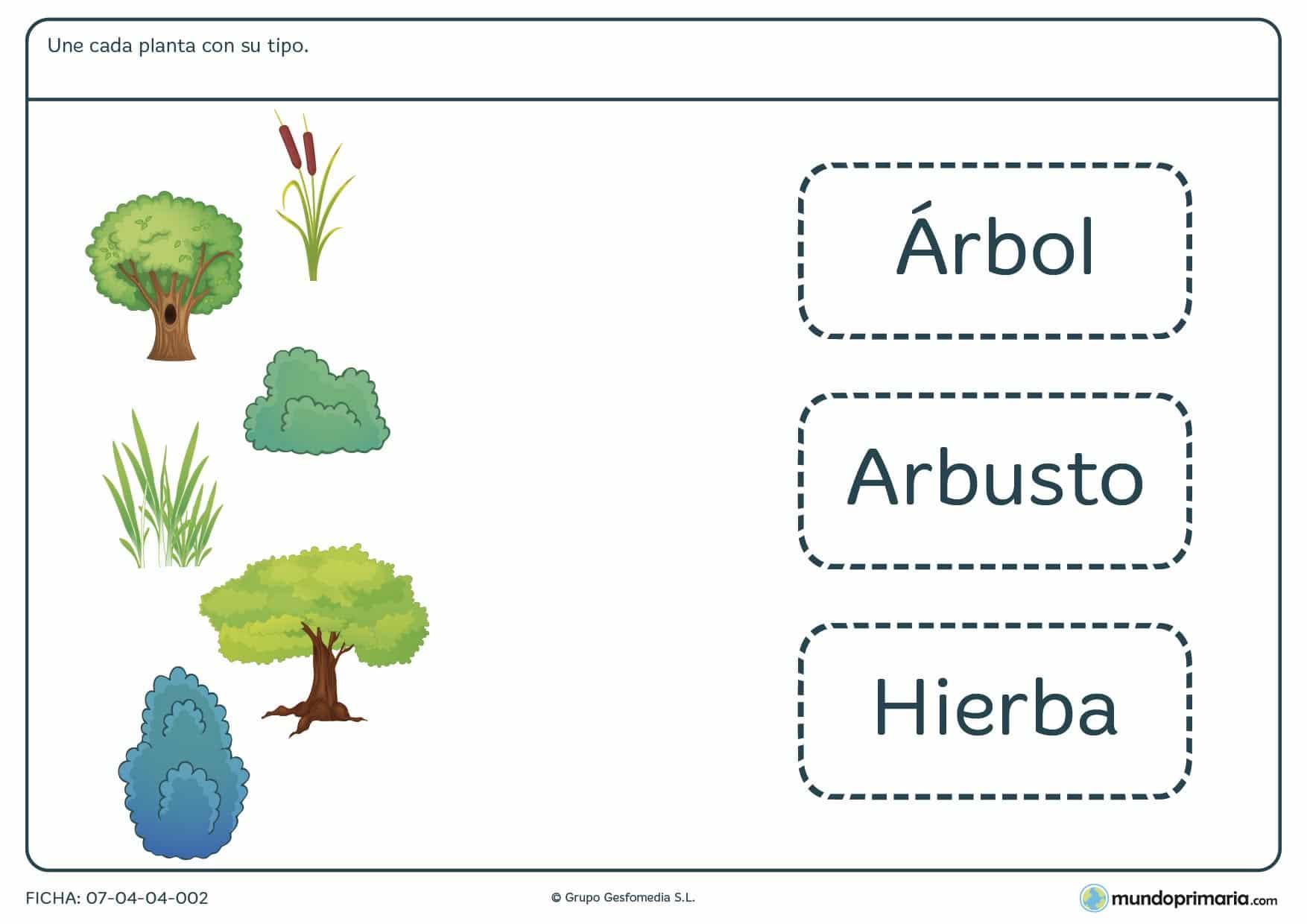 Ficha de tipos de plantas en la que deberás unir los dibujos con sus correspondientes nombres sobre el tipo de planta que son.