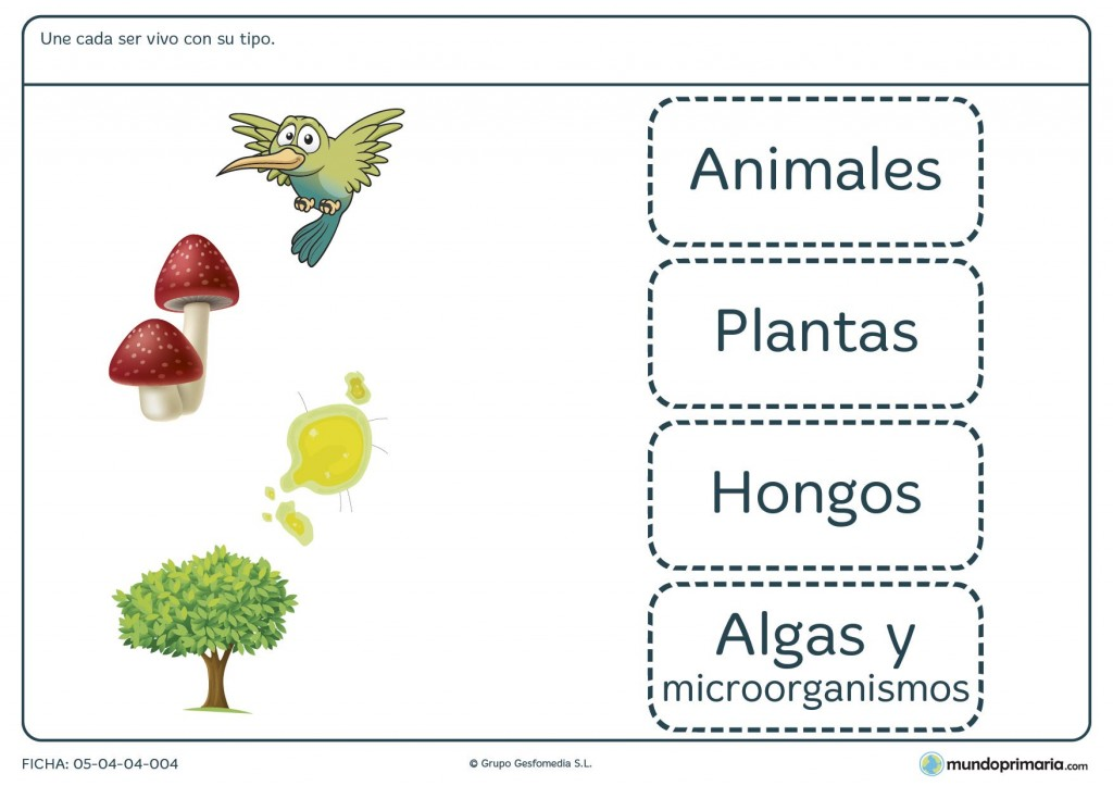 Ficha de tipos de seres vivos para primaria