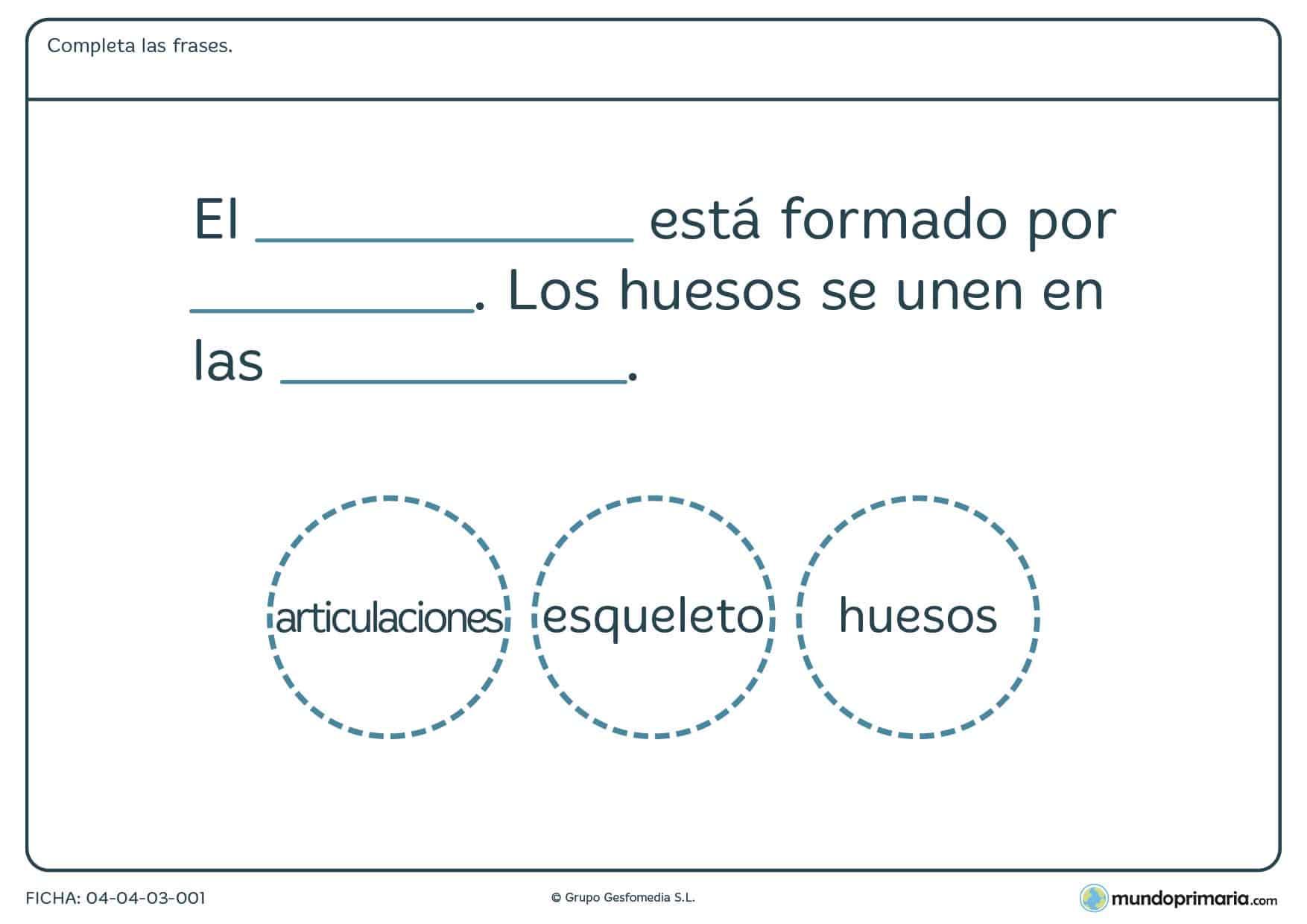 Ficha del esqueleto para completar correctamente una frase ordenando palabras sobre el sistema oseo