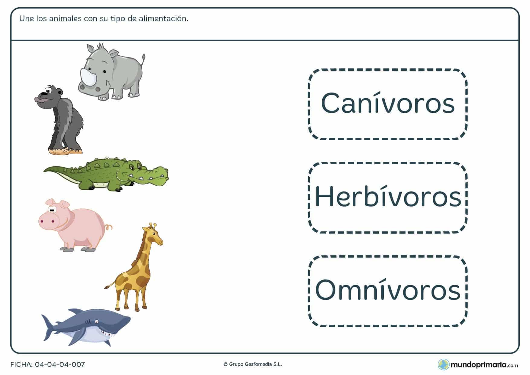 Ficha de animales y su alimentación en el que hay que unir los animales del ejercicio con el tipo de alimentación que corresponda a dicho animal.
