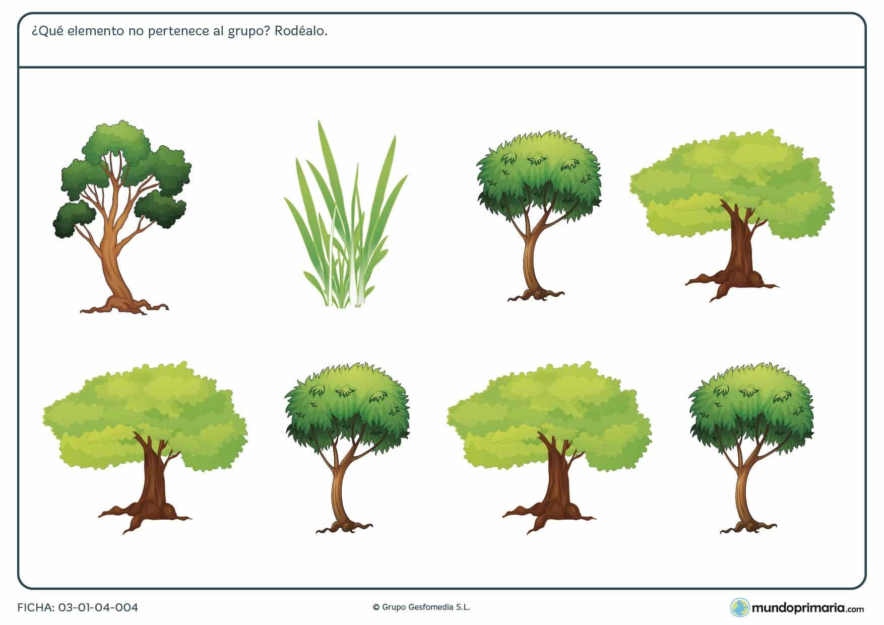 Repasa con los ejercicios de la ficha de elementos diferentes para niños de primaria en la que localizar el elemento diferente del grupo