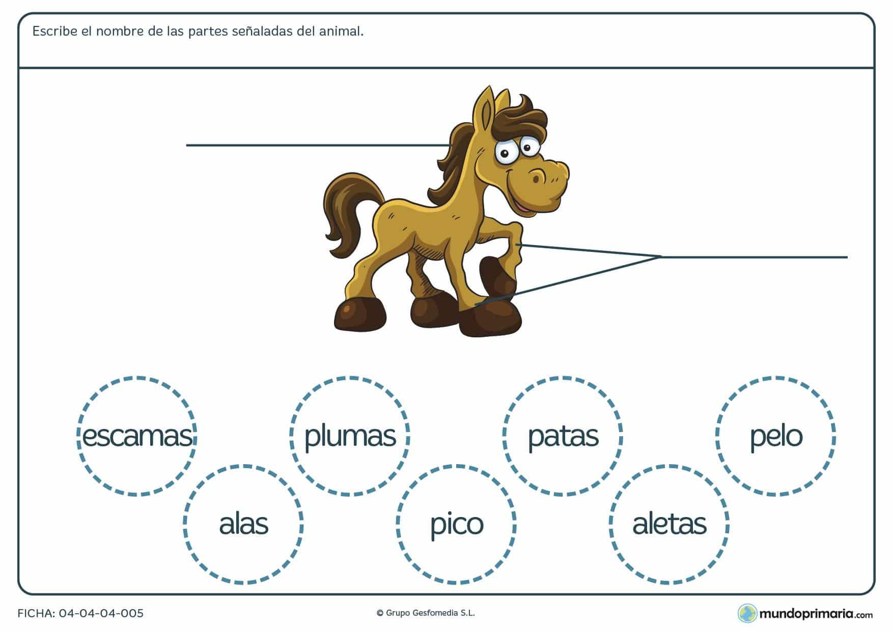 Ficha de las partes del caballo en el que hay que escribir las partes del animal según corresponda y eligiendo entre las opciones proporcionadas en el ejercicio.