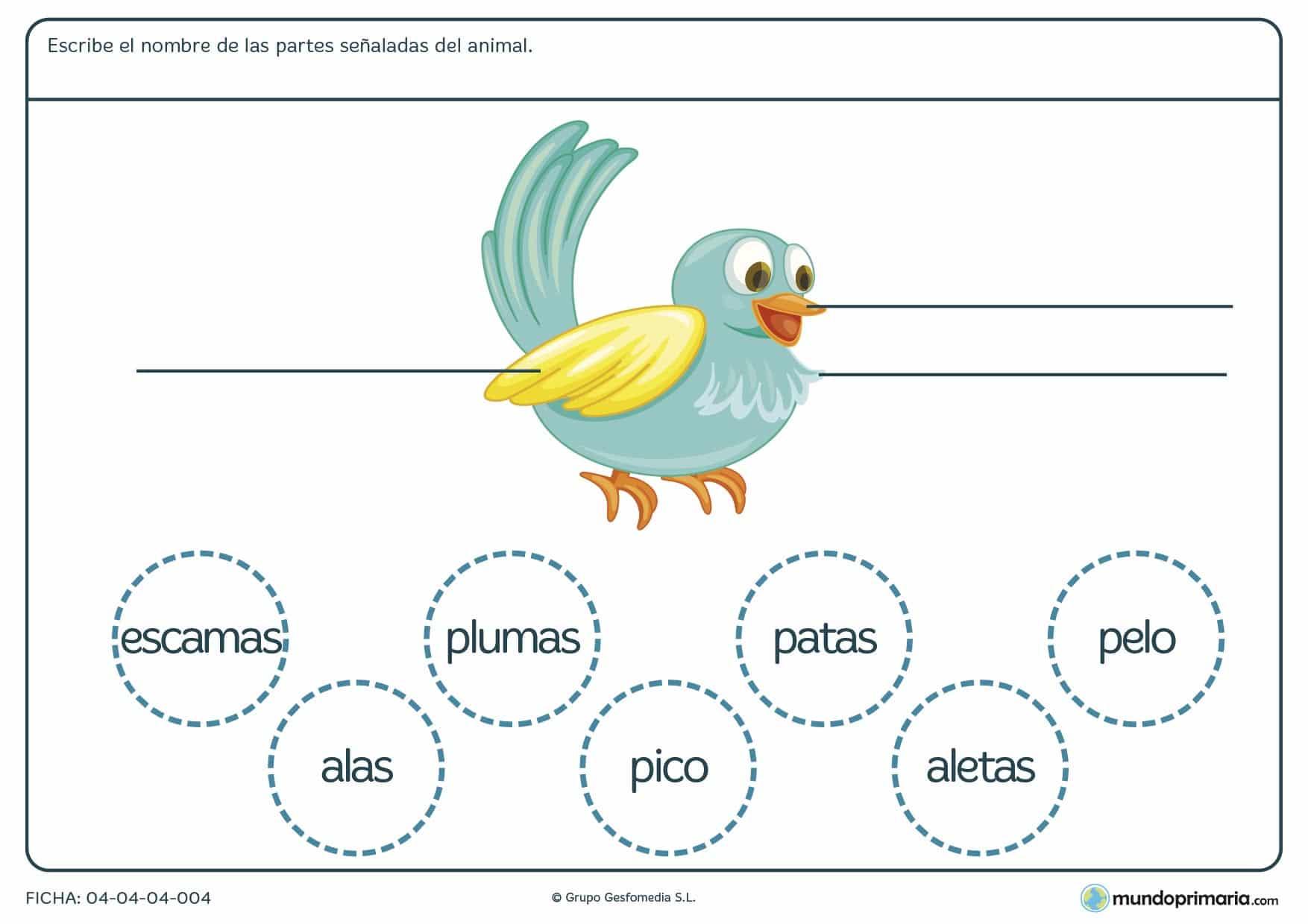 Ficha de las partes del pájaro en el que hay que escribir las partes del animal según corresponda y eligiendo entre las opciones proporcionadas en el ejercicio.