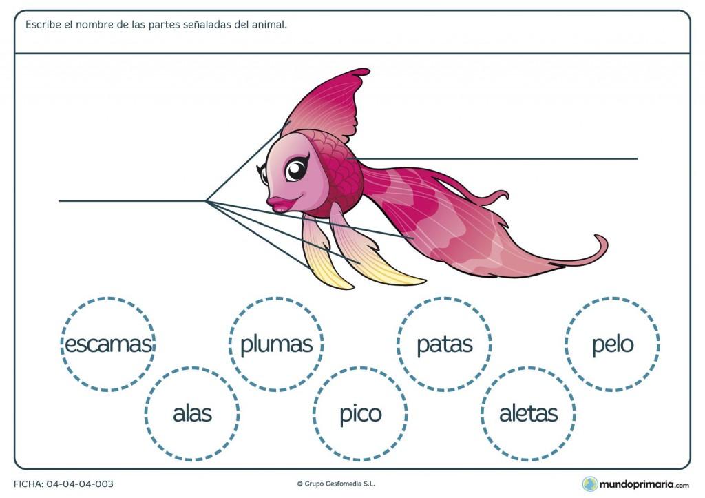 Ficha de las partes del pez para primaria