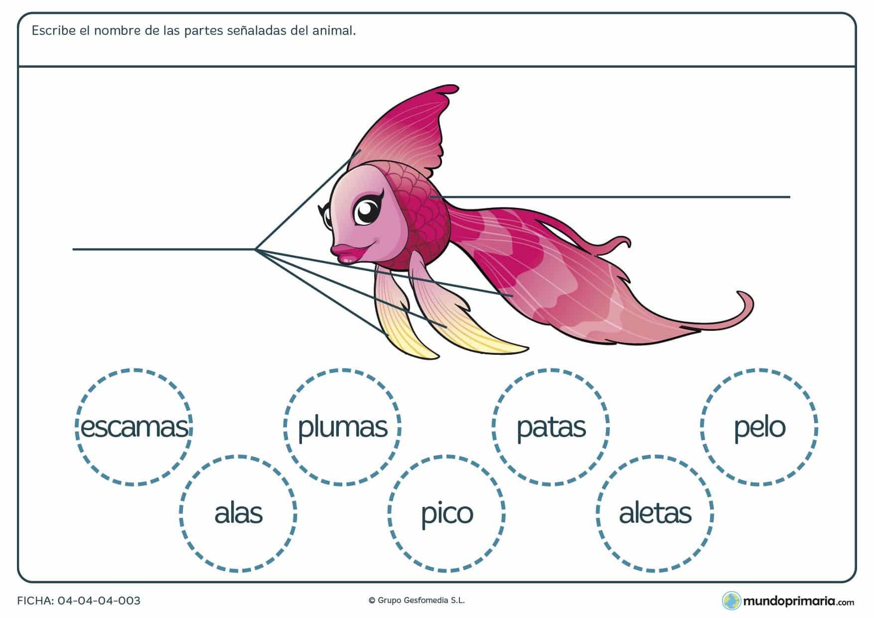 Ficha de las partes del pez en el que hay que escribir las partes del animal según corresponda y eligiendo entre las opciones proporcionadas en el ejercicio.