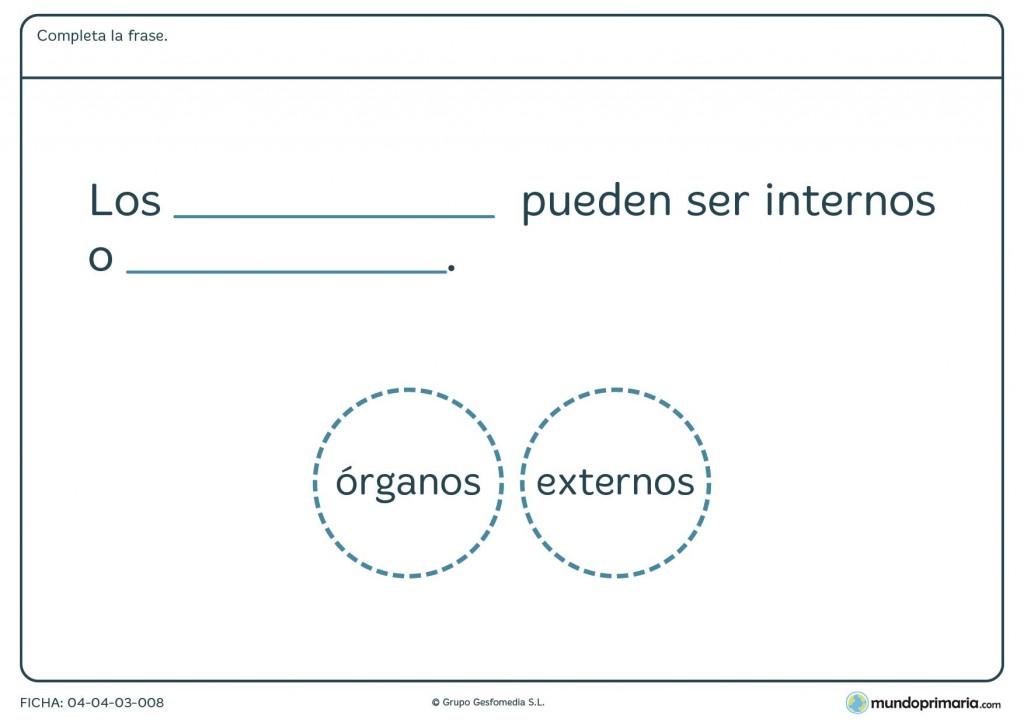 Ficha de los órganos para primaria