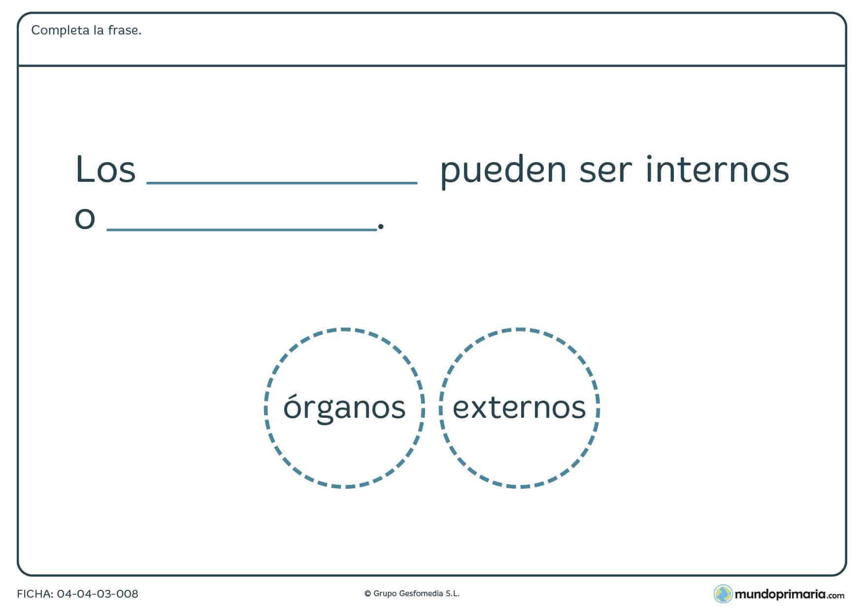 Ficha de los órganos en el que hay que completar la frase con la palabra correcta proporcionada en el ejercicio.