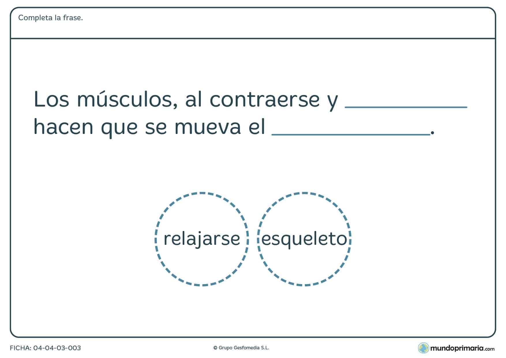 Ficha de los músculos en el que hay que completar la frase con la palabra correcta proporcionada en el ejercicio.