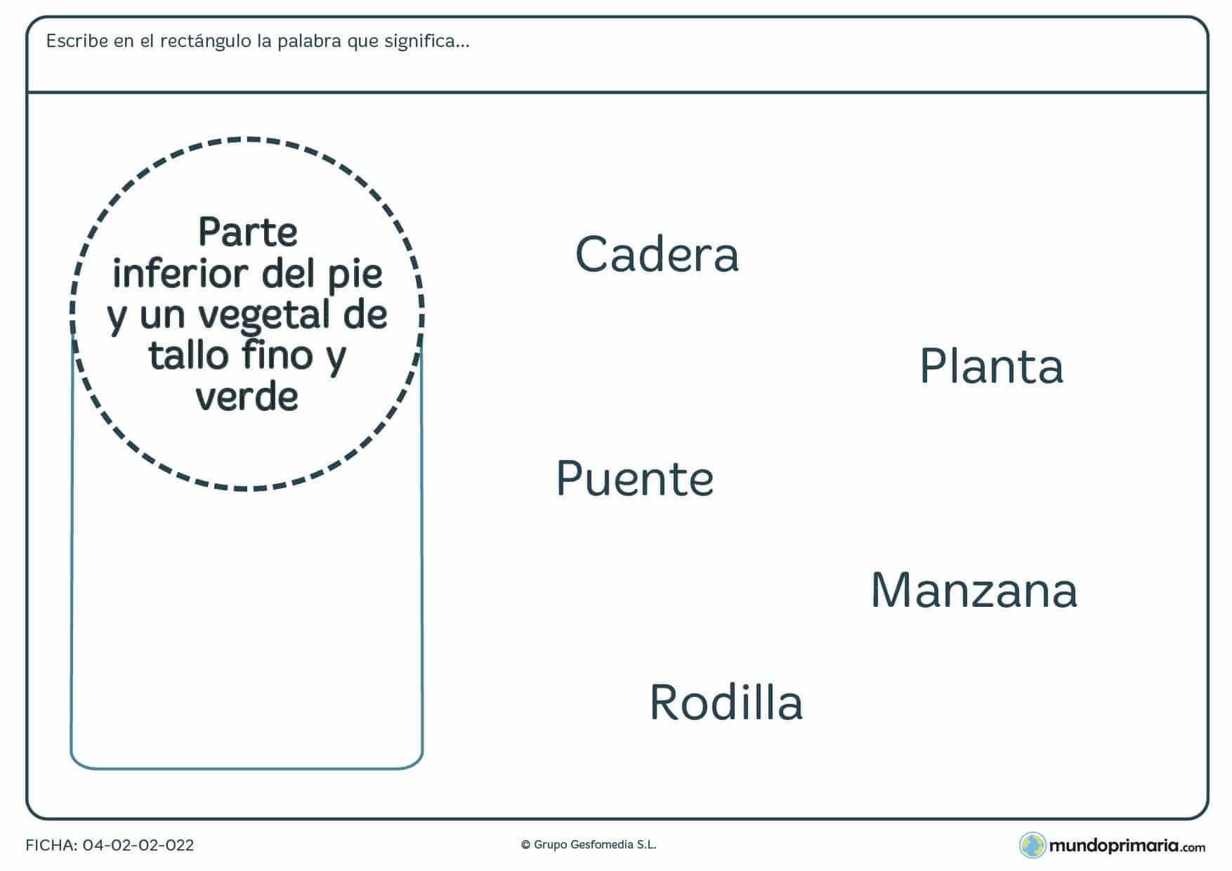 Ficha de niños de primaria de relacionar una palabra con su significado en la que tendrás que relacionar alguna de las palabras dadas con la descripción que aparece en el círculo.