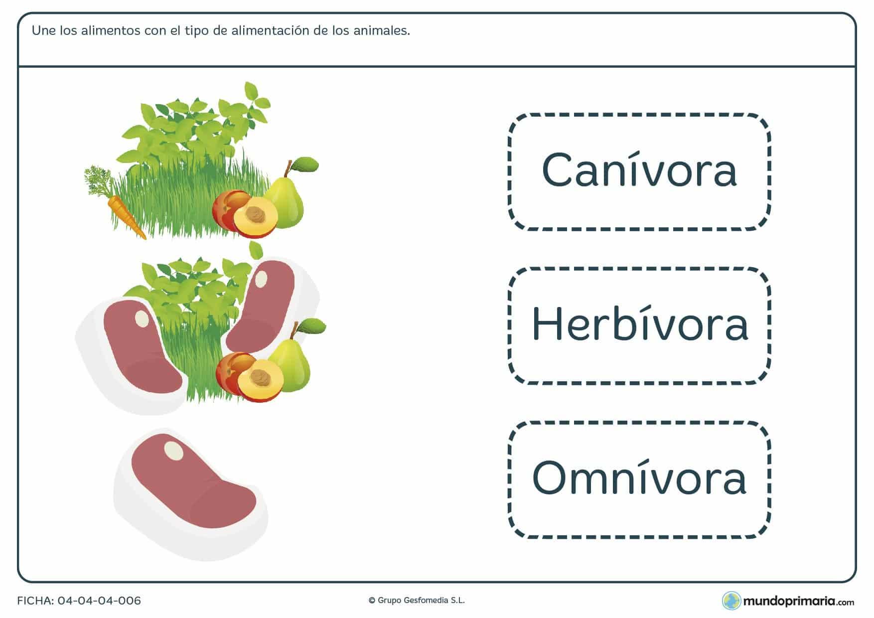 Ficha de tipos de alimentación en el que hay que unir el tipo en cuestión con los alimentos correspondientes a dicho tipo.