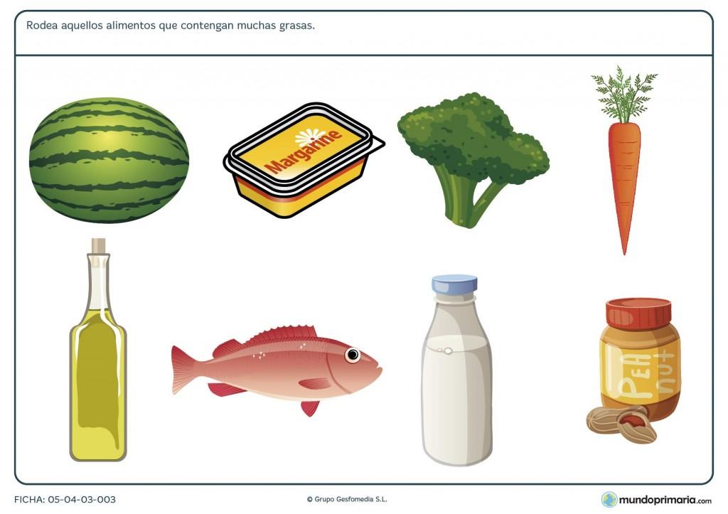 Ficha de los alimentos altos en grasas para primaria