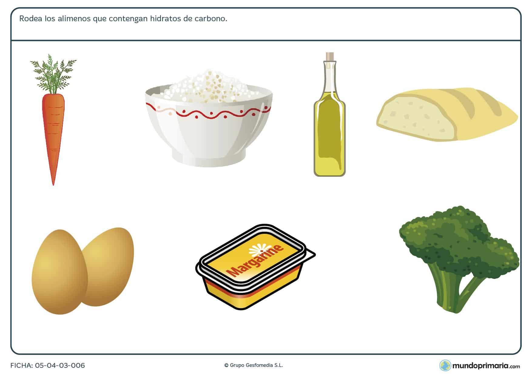 Ficha de los alimentos altos en hidratos de carbono en el que se tiene que rodear las ímagenes de los alimentos altos en hidratos de carbono.