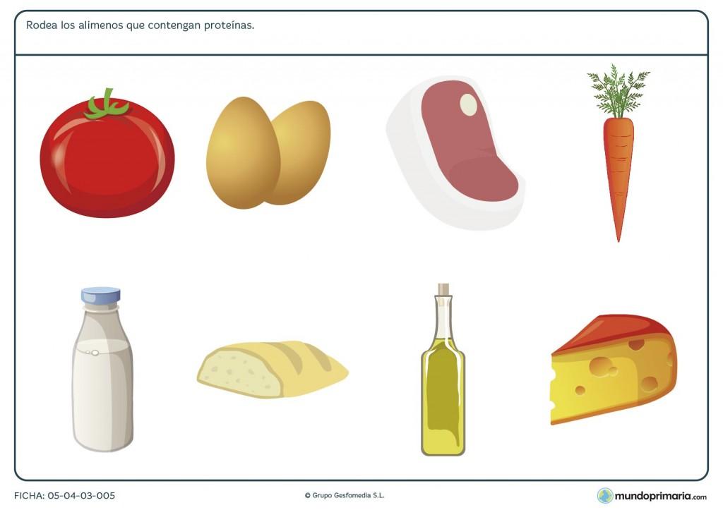 Ficha de los alimentos altos en proteínas para primaria