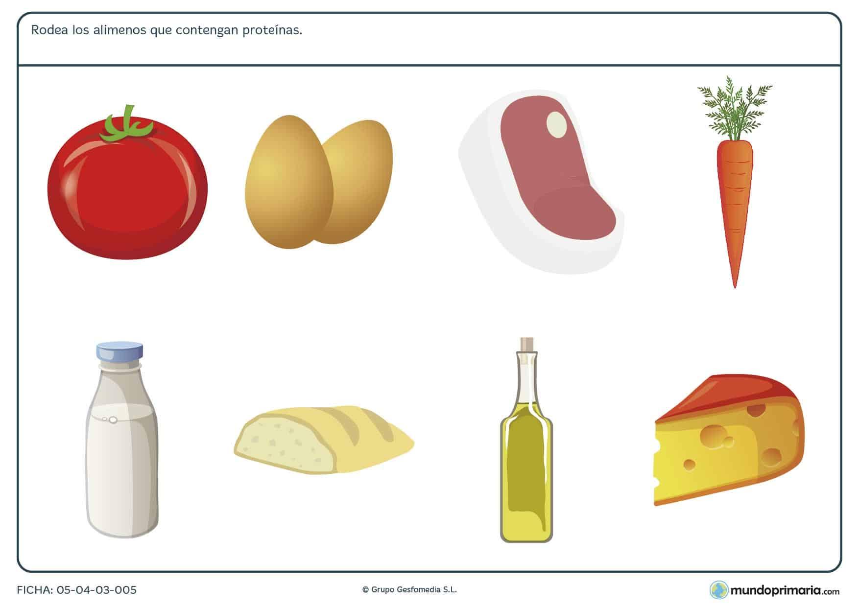 Ficha de los alimentos altos en proteínas en el que se tiene que rodear las ímagenes de los alimentos altos en proteínas.