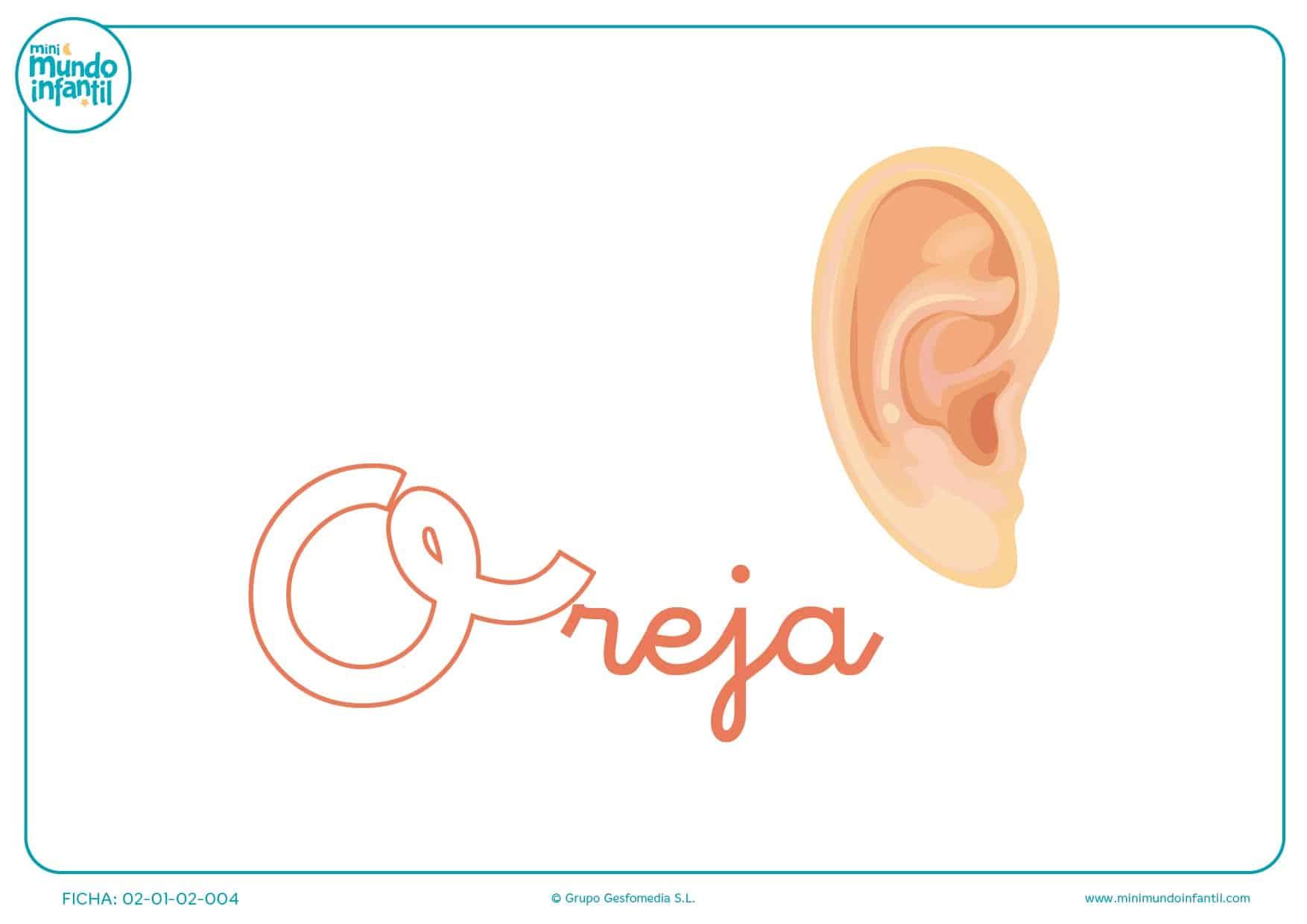 Letra o de oreja en minúsculas para completar