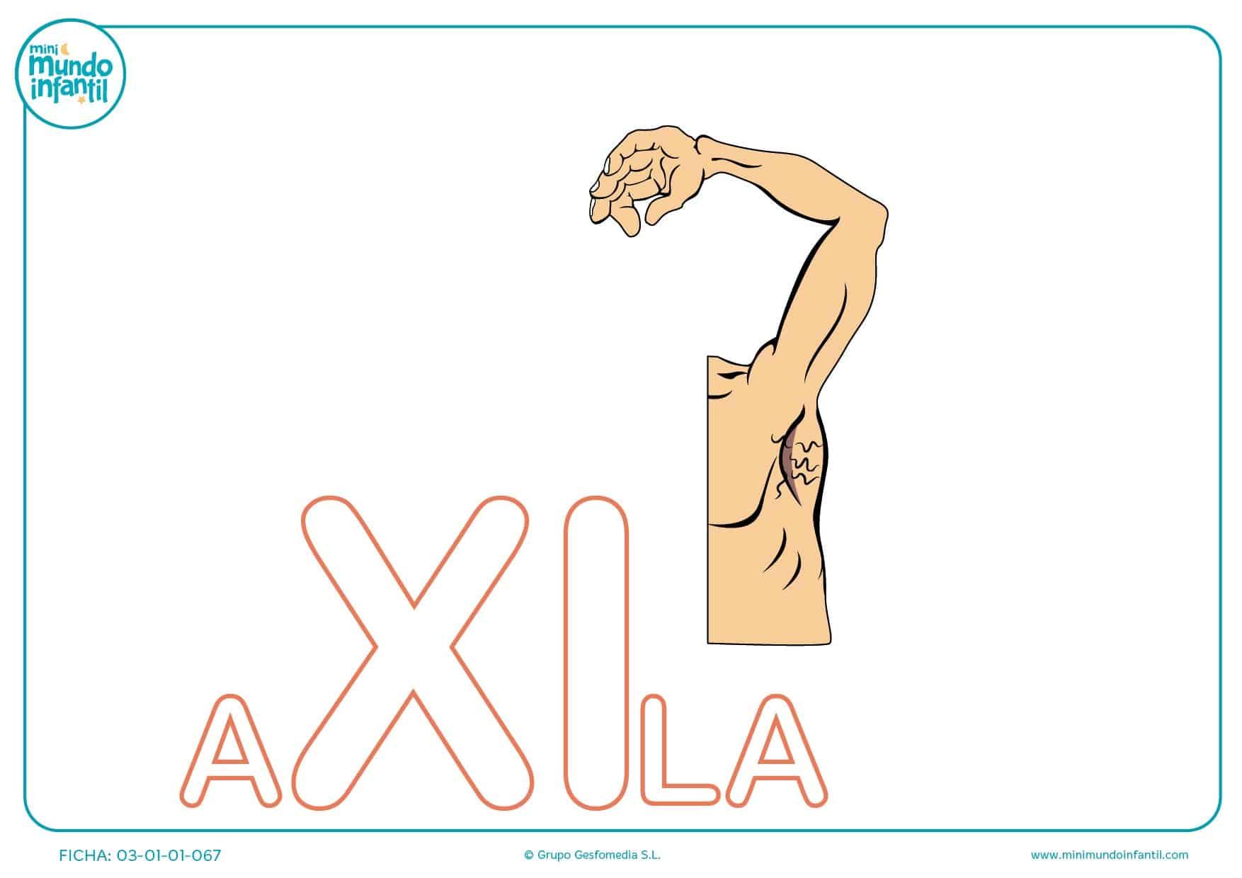 Sílaba XI mayúscula de axila para colorear