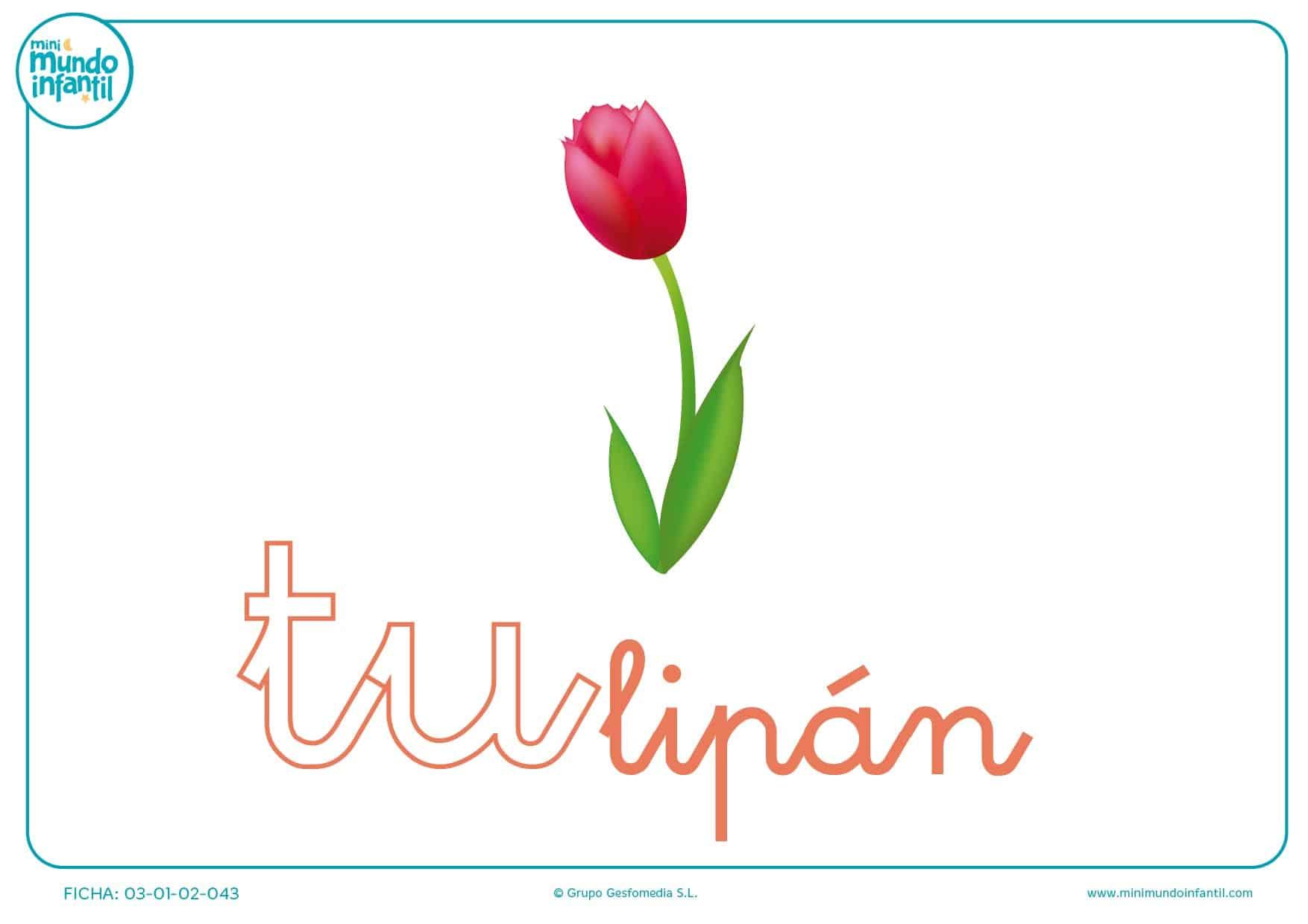 Sílaba TU minúscula de tulipá para pintar