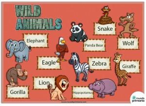 Los animales salvajes: Vocabulario en inglés