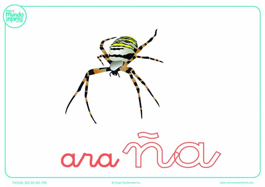 Sílaba ÑA minúscula de araña para poner color