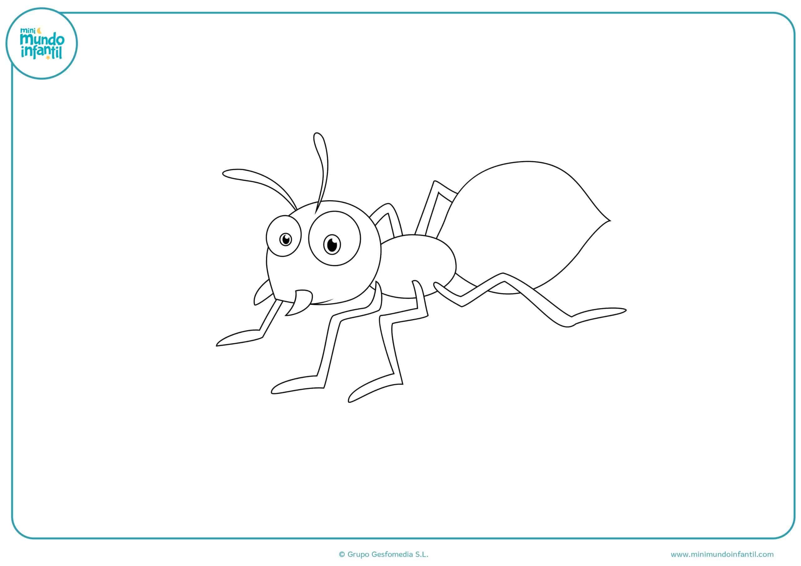 Colorear dibujos insectos