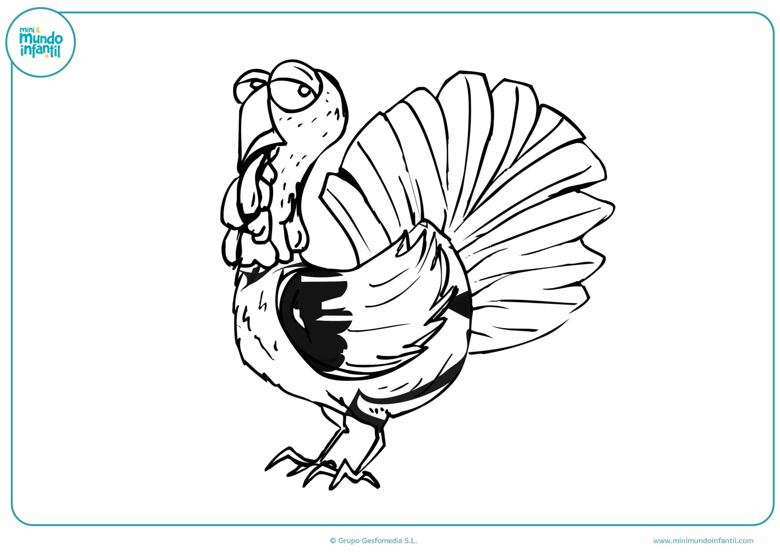 Dibujos colorear animales aves niños
