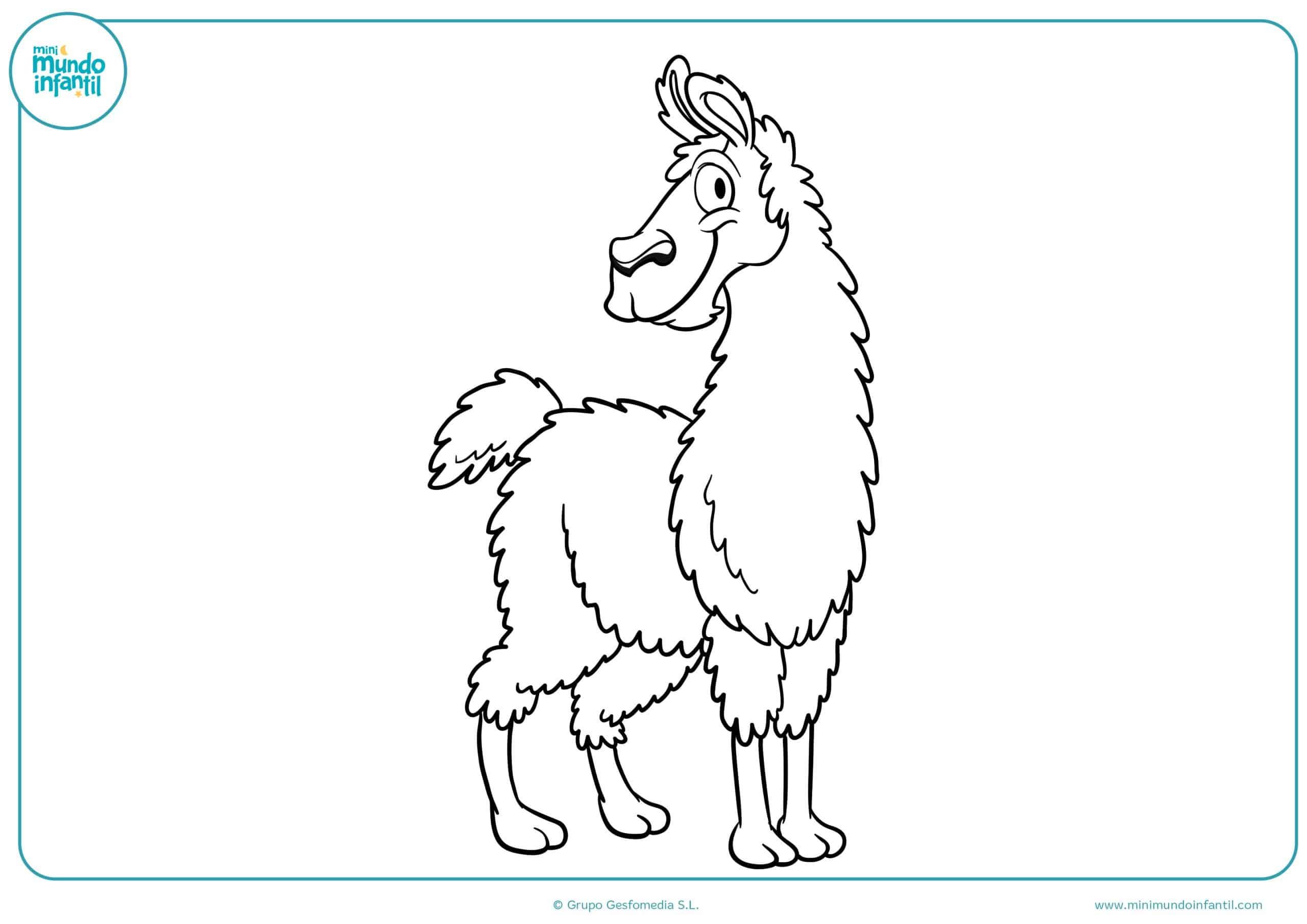 Dibujos colorear animales omnívoros