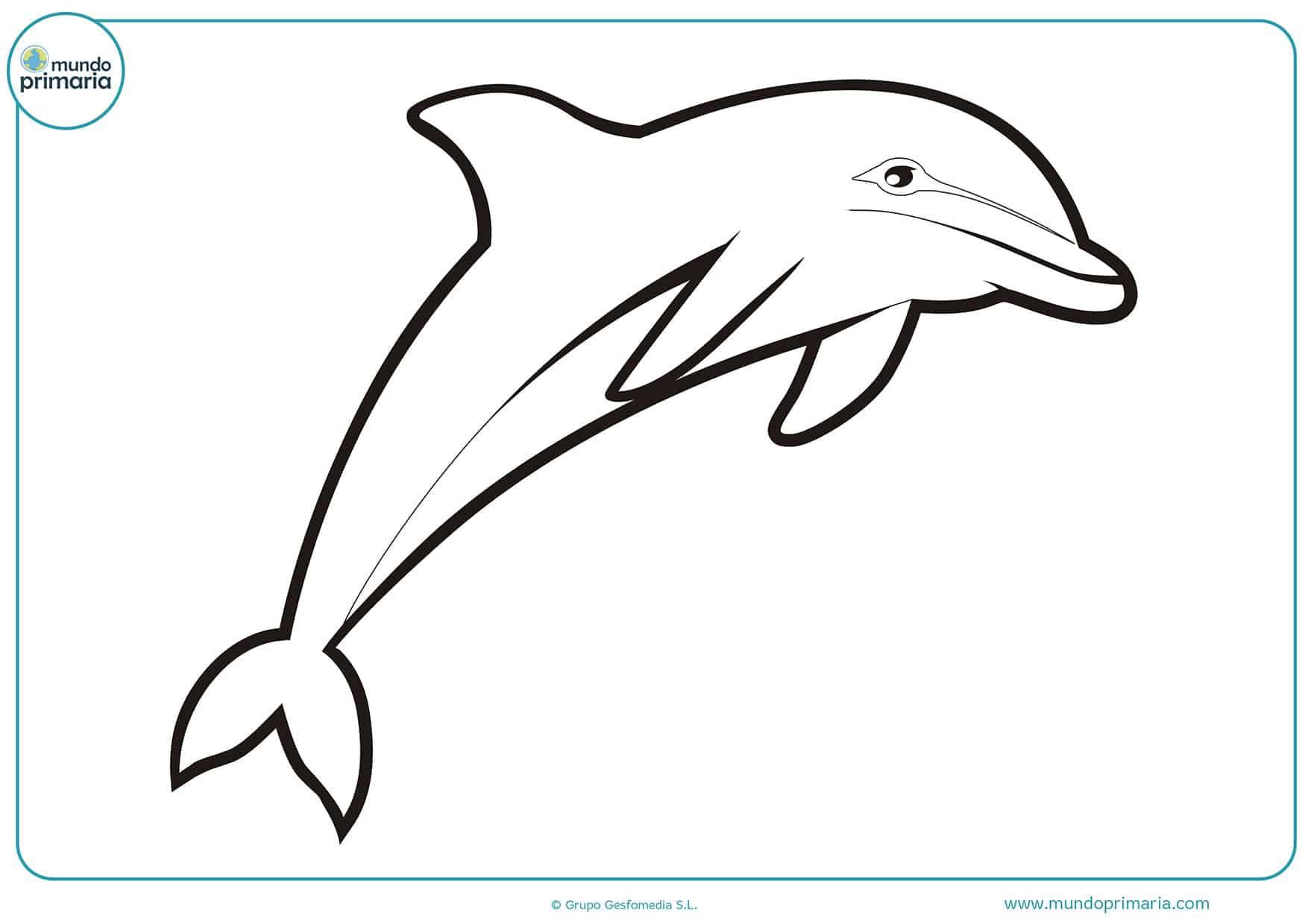Delfines colorear primaria