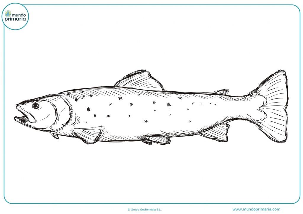 Pinta el dibujo del pescado con colores para completarlo