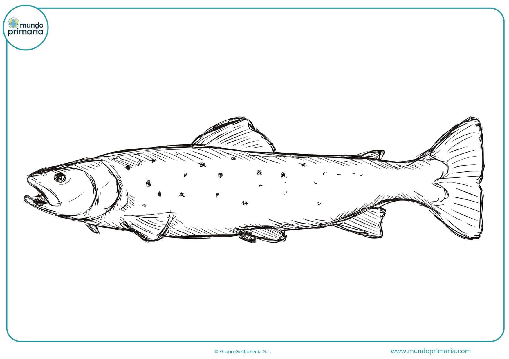 Colorear dibujos pescado gratis