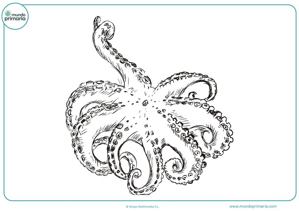 Imagen coloreable de un pulpo con muchos tentáculos