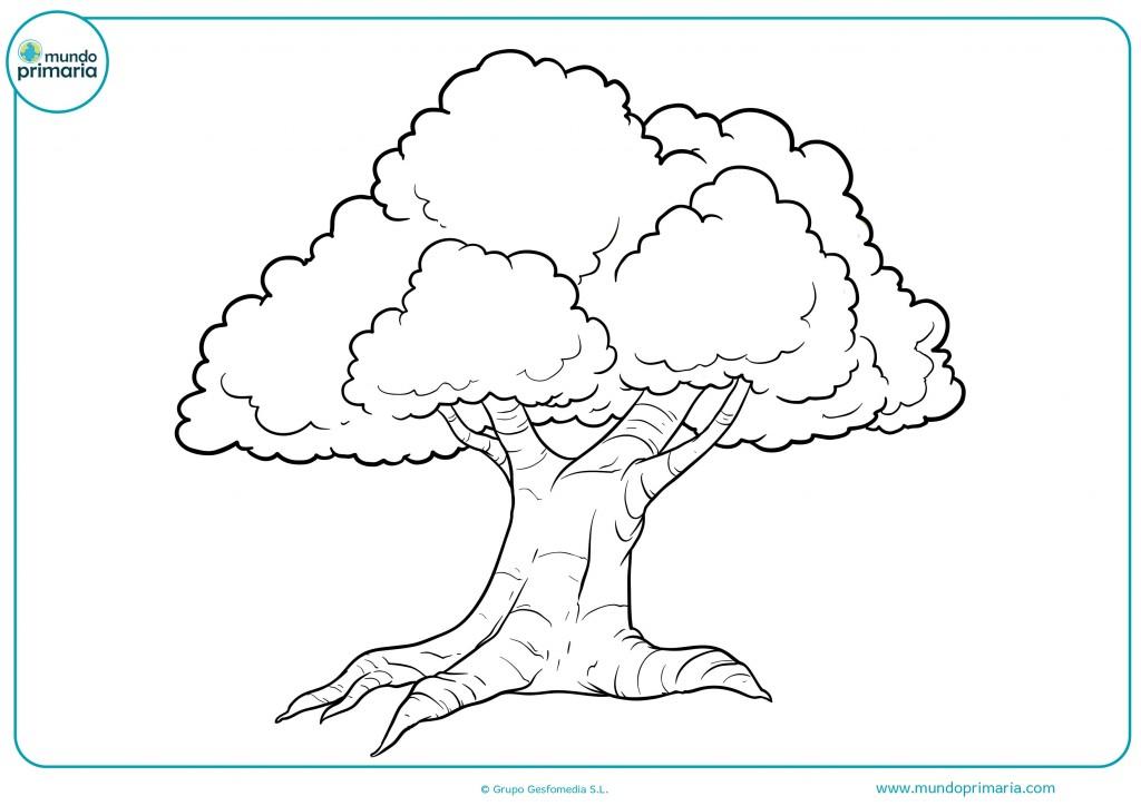 Colorear este bonito árbol muy antiguo y con ramas de colores
