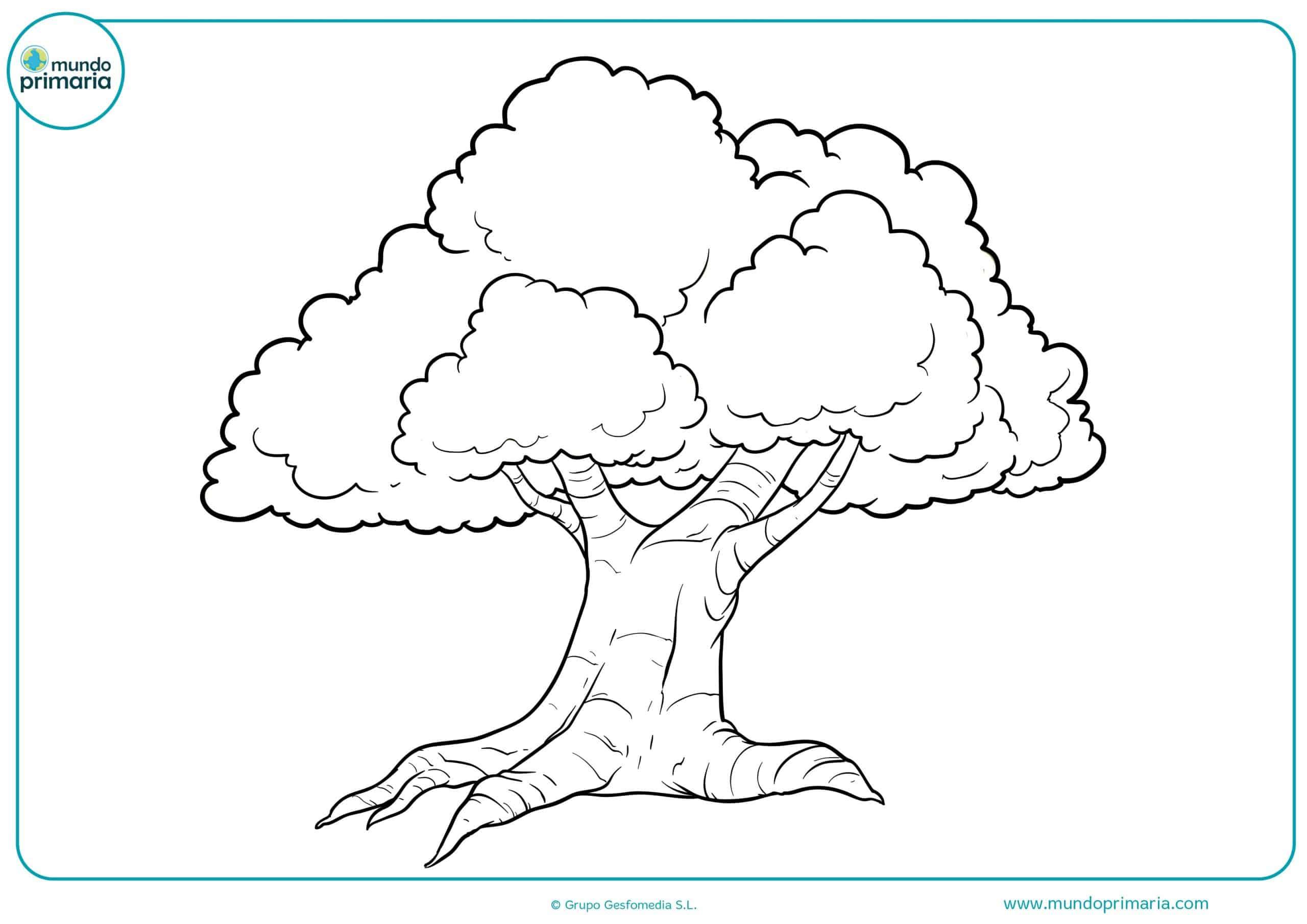 Dibujos colorear arboles