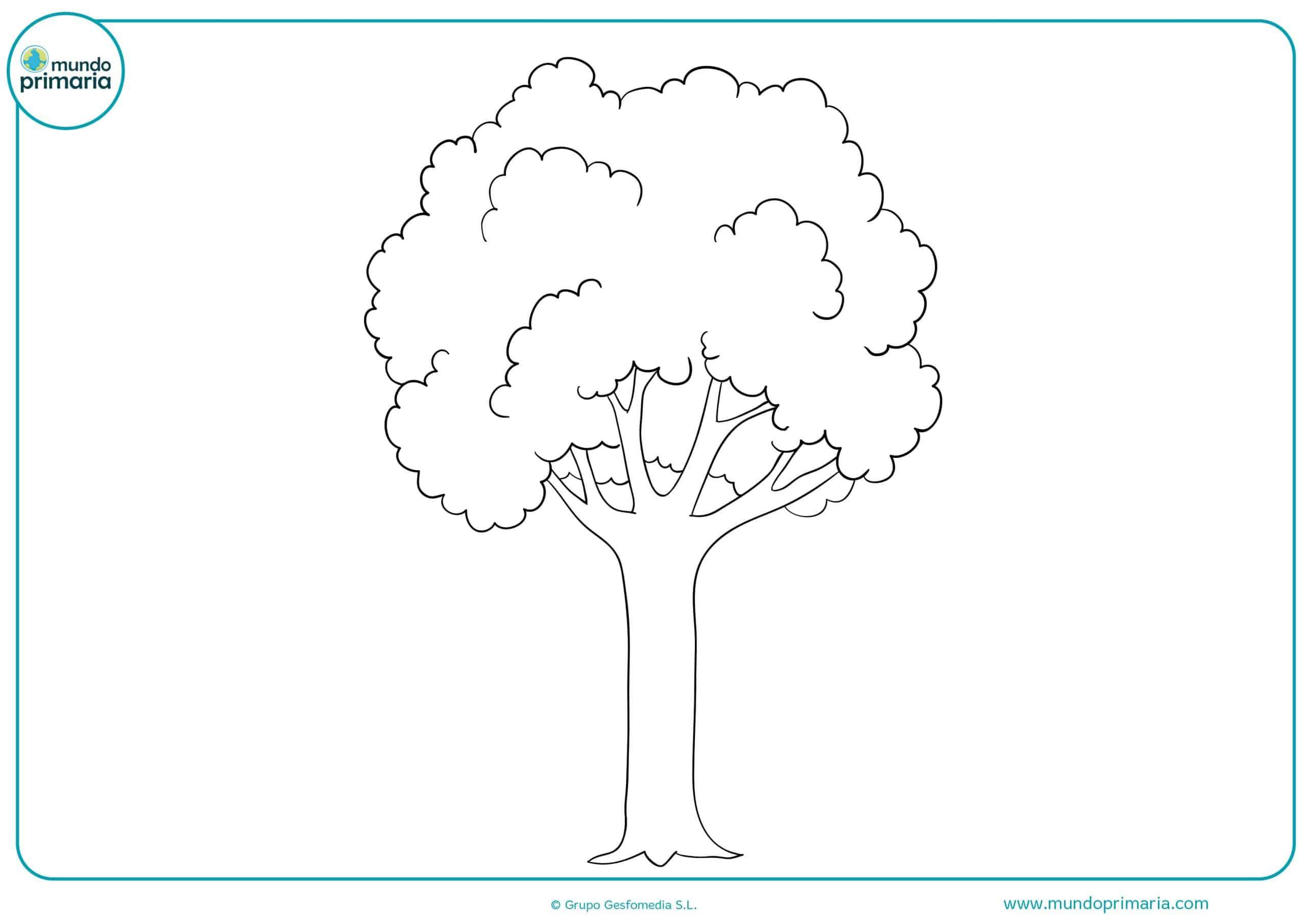 Dibujos De árboles Para Colorear Mundo Primaria