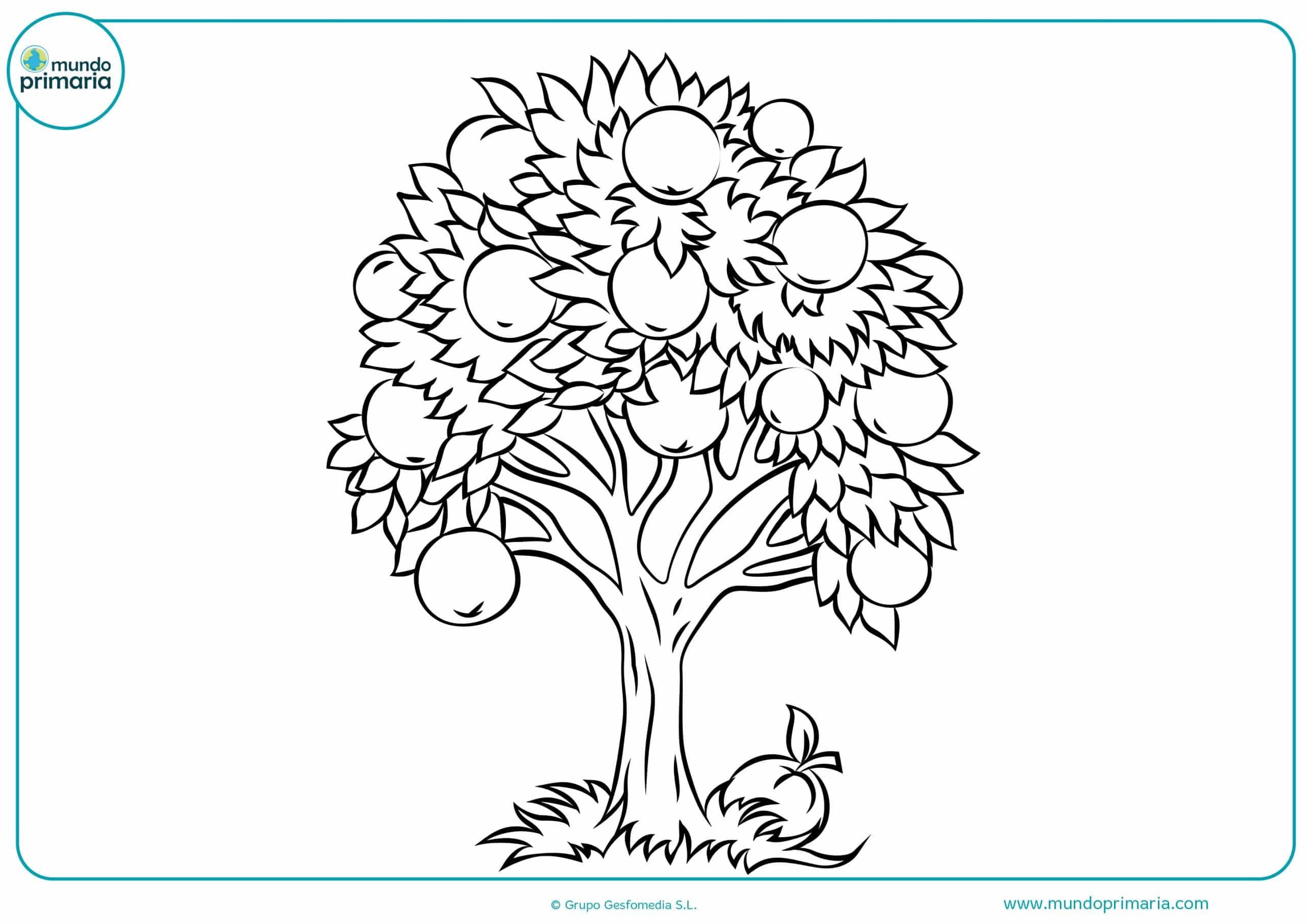 Dibujos colorear arboles niños