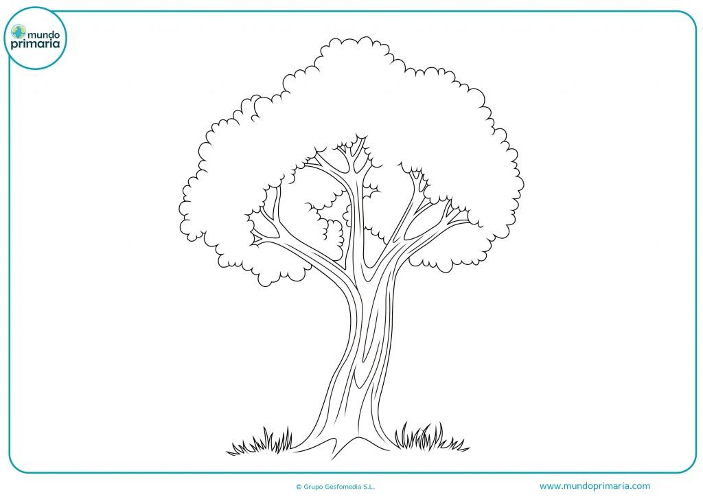 Colorear este árbol de montaña con colores verdes y marrones